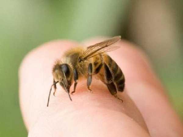 Mơ thấy ong nên đánh con số lô đề nào?