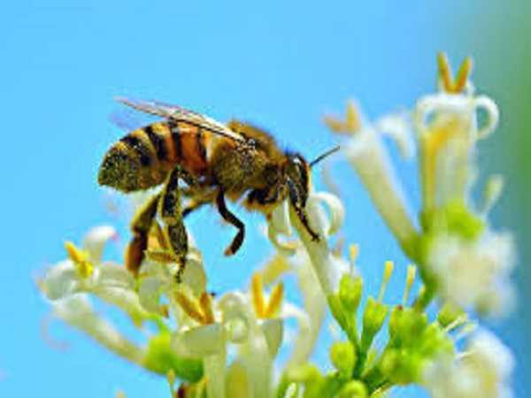 Điềm báo trong giấc mơ thấy ong