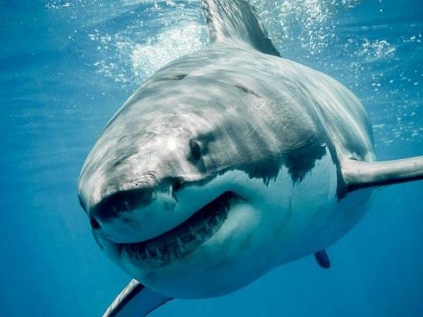 Mơ thấy cá mập là điềm báo lành hay dữ?