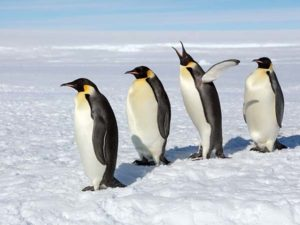 Mơ thấy chim cánh cụt – Ý nghĩa của giấc mơ thấy chim cánh cụt