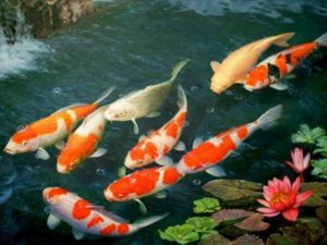 Mơ thấy cá chép báo mộng điềm lành hay dữ? Đánh ngay số mấy?