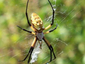 Ngủ mơ thấy con nhện là điềm báo gì ? Đánh lô đề con gì chắc trúng ?