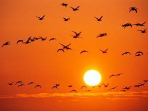 Giải mã giấc mơ thấy mặt trời là điềm báo điều gì? Đánh con gì?