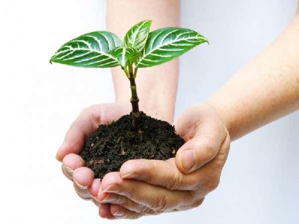 Nằm ngủ mơ thấy trồng cây là điềm lành hay dữ ? Đánh lô đề con gì ?
