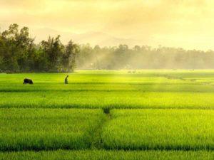 Ngủ mơ thấy cánh đồng – Chiêm bao thấy cánh đồng có ý nghĩa gì