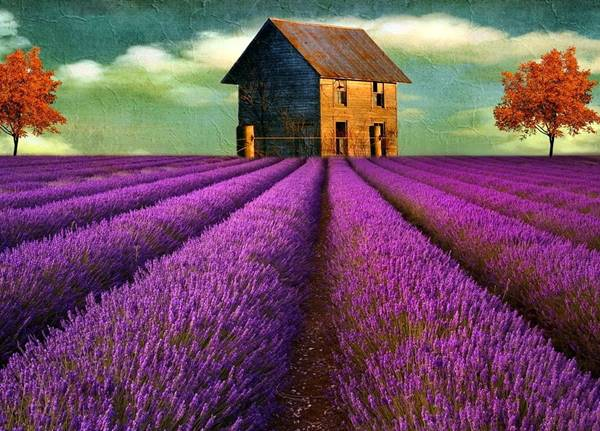 Nằm mơ thấy màu tím là điềm báo gì nên chọn con số may mắn nào