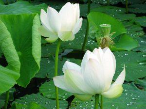 Tổng hợp ý nghĩa giấc mơ thấy hoa màu trắng đánh con gì chính xác?