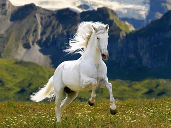 Mơ thấy ngựa điềm báo lành hay dữ?