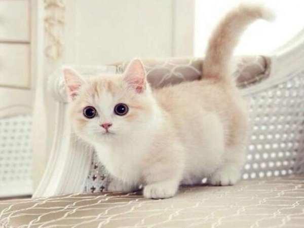 Ngủ mơ thấy mèo trắng là điềm hên hay xui ? Đánh số mấy ?