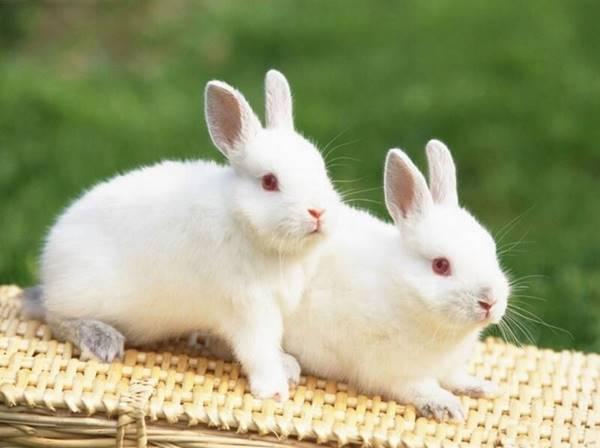 Giải mã giấc mơ thấy con thỏ trắng nên đánh con gì đánh số mấy