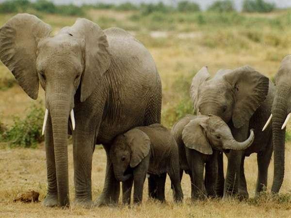 Ngủ mơ thấy voi đánh lô số mấy trúng ? Là điềm báo gì ?