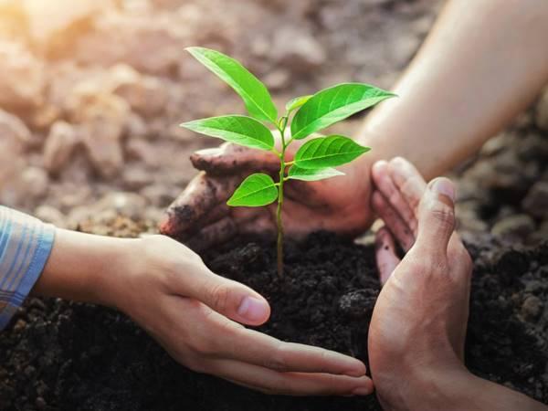 Nằm mơ thấy trồng cây đánh con gì? Giải mã giấc mơ