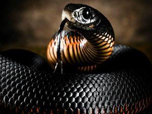 Nằm mơ thấy rắn đen đánh con gì ăn chắc, có điềm báo gì
