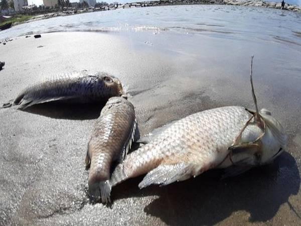Mơ thấy cá chết – Đánh lô đề số mấy ? là điềm hung hay cát?